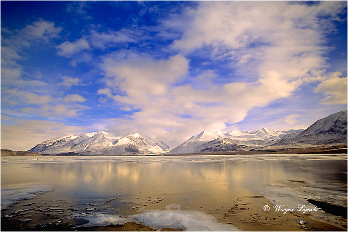 Ellesmere Island National Park 101 by Wayne Lynch ©