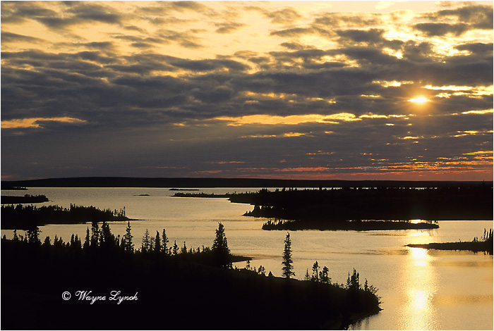 Damant Lake Barrenlands 104 by Dr. Wayne Lynch ©