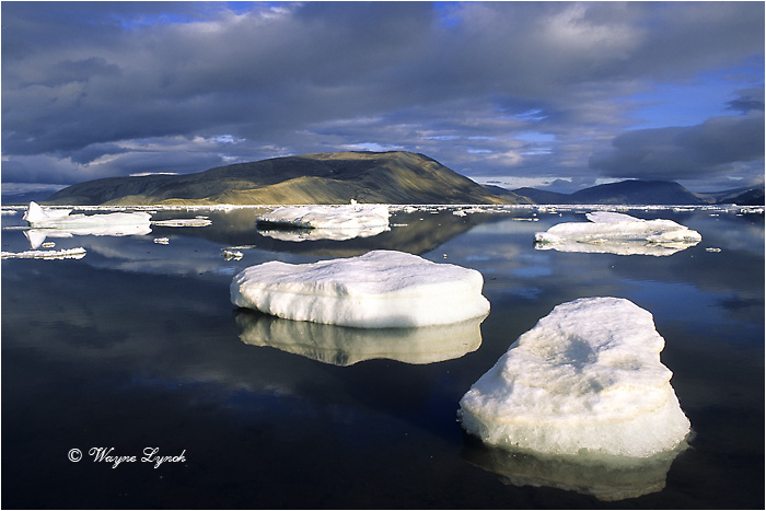 Discovery Harbour - Ellesmere Island 101 by Dr. Wayne Lynch ©