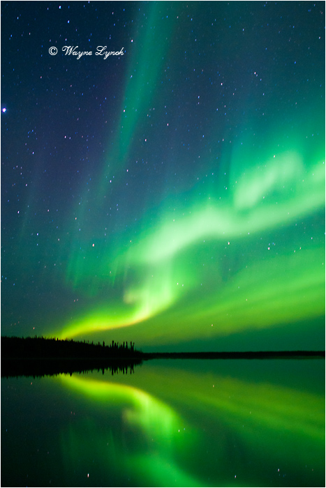 Aurora Borealis by Dr. Wayne Lynch ©