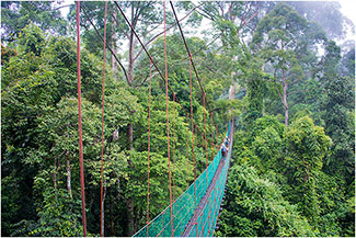 Canopy Walkway, Danum Rainforest, Borneo, 2014 by Dr. Wayne Lynch ©