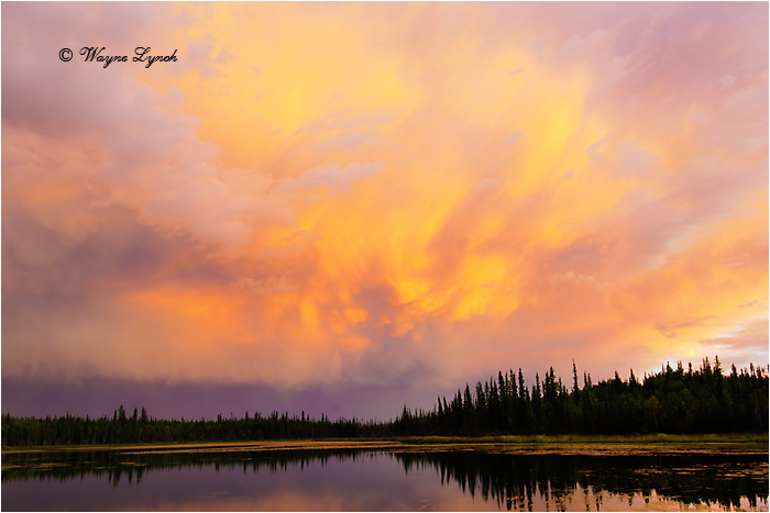 Boreal Sunset NWT by Dr. Wayne Lynch ©
