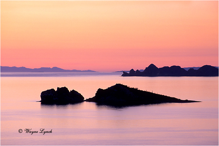 Sea of Cortez Mexico 101  by Wayne Lynch ©