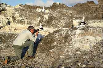 Nazca Boobies, Galapagos Islands 20016 Dr. Wayne Lynch ©