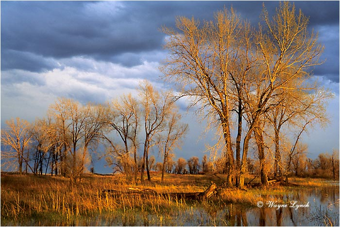 Sheyenne National Grasslands 101 by Wayne Lynch ©
